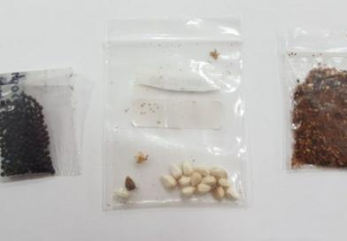 Parte dos pacotes com sementes da China não solicitadas contém praga inexistente no Brasil